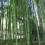 Bamboo Shoots and Business Models